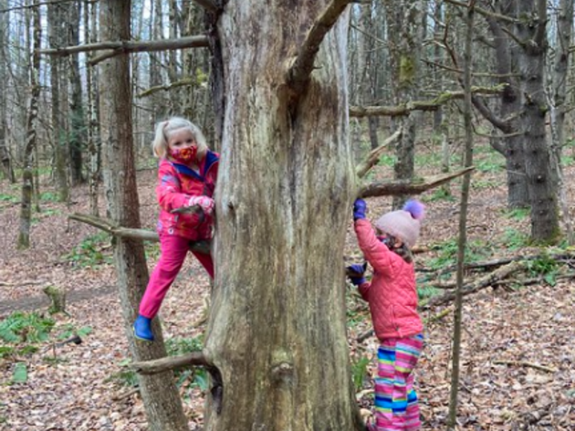 An Abrupt End to Fall Forest Playschool