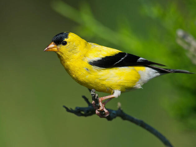 Climate Change and Birds Near You