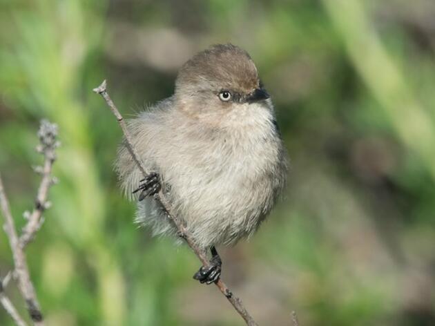 Female Bird Day: May 29 - 31