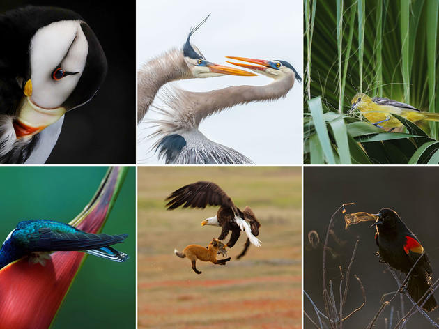Audubon Photography Awards Show Canceled in Vermont