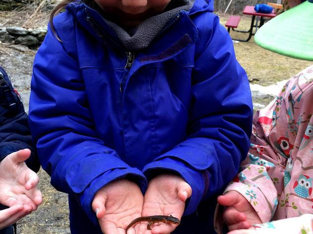 A Salamander Spring Day