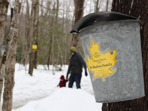 Maple Sugaring Season at the Green Mountain Audubon Center