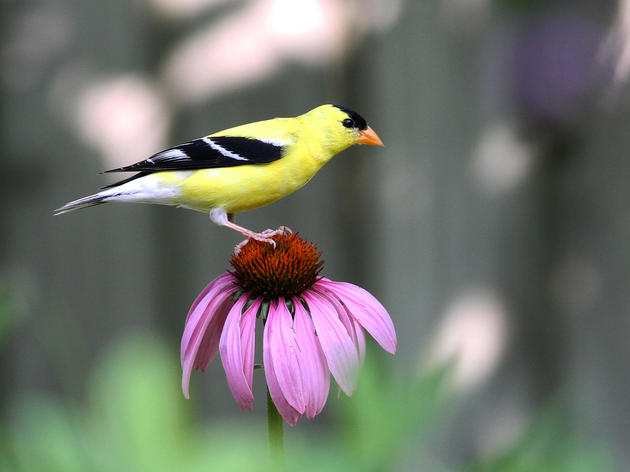 Showing the love, new legislation promotes habitat for the birds and the bees.