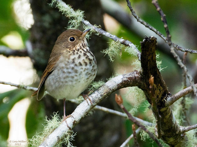 Vermont Introduces New Law to Protect Migratory Birds