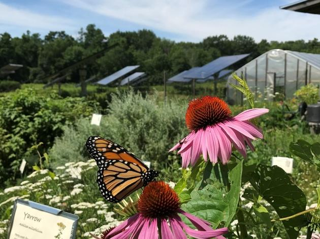 Vermont Legislature Passes Voluntary Pollinator-friendly Standard for Solar Sites
