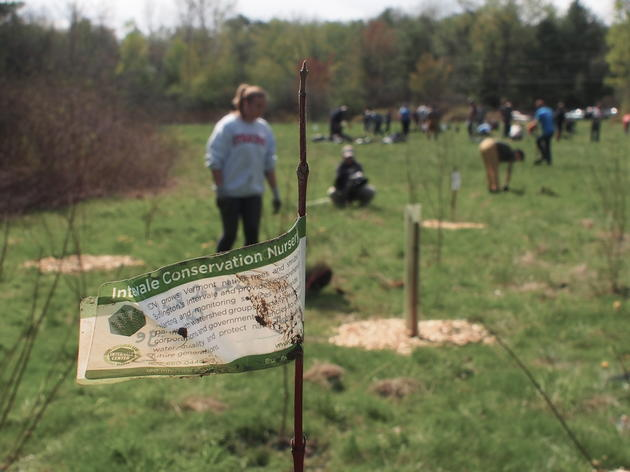 Plants for Birds: Oakledge Park Tree Planting