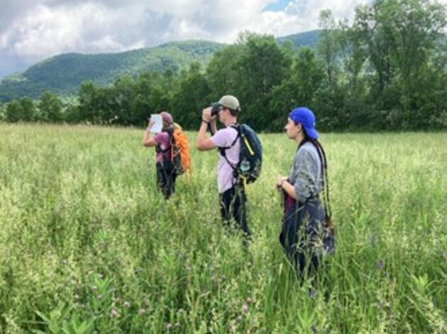 On The Frontlines of The Bobolink Project