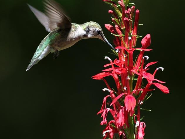 Spring has Sprung: Hummingbirds are Back!