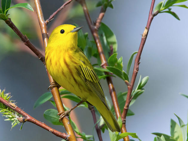 A Guide to Luring Warblers, Tanagers, Orioles, and Grosbeaks to Your Yard
