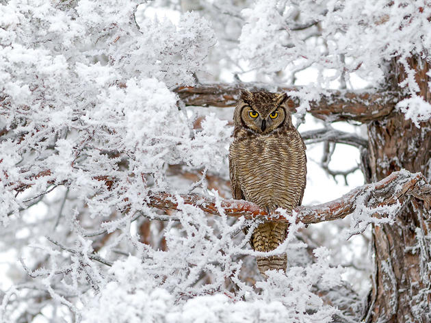 How to Help Owls and Other Raptors After Snowstorms