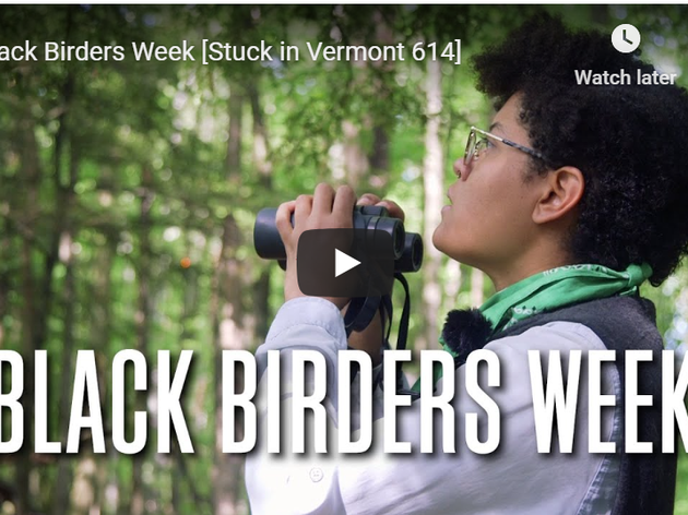 Stuck in Vermont: Birding With Debbie Archer of Audubon Vermont During Black Birders Week