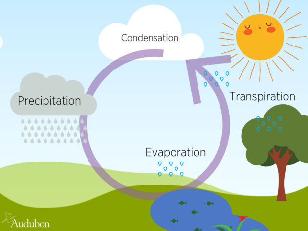 The Water Cycle Revisited!