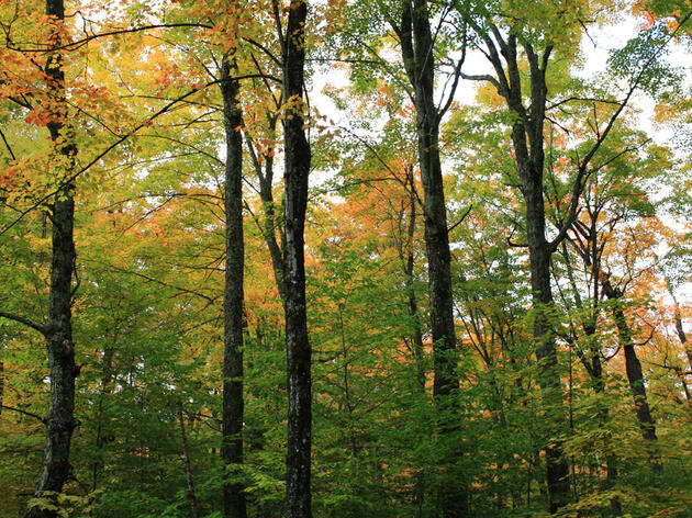 Forests Belong in Reconciliation Bill