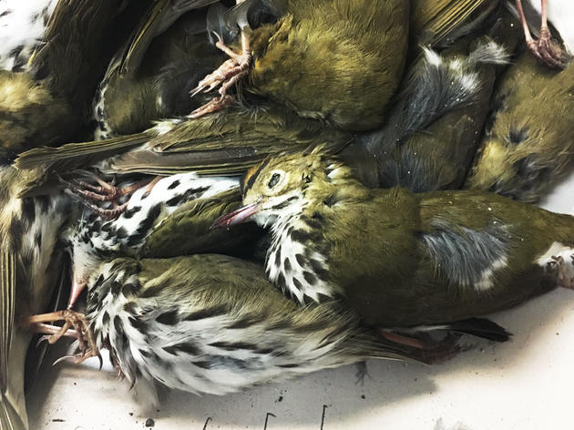 Nearly 400 Migratory Birds Were Killed by One Texas Building in a Single Night