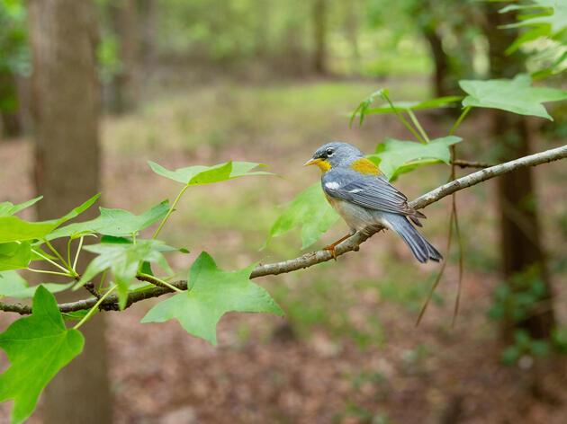 Audubon's Natural Climate Solutions Report