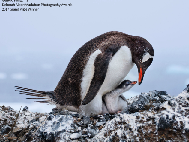 Audubon Photography Awards Traveling Exhibit