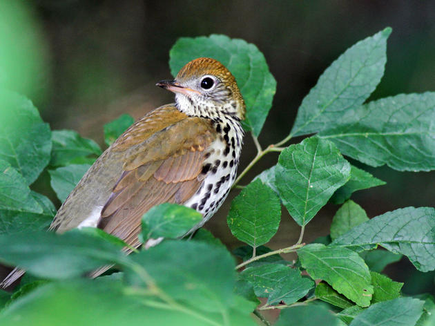 Vermont birds, climate, and economy