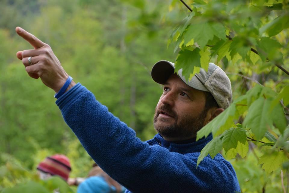 Forest Birding