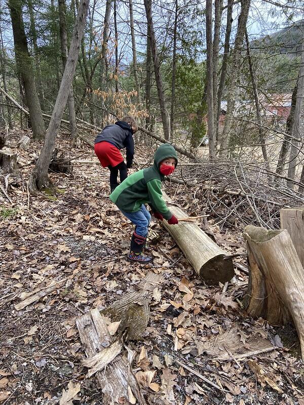 Drumming on logs