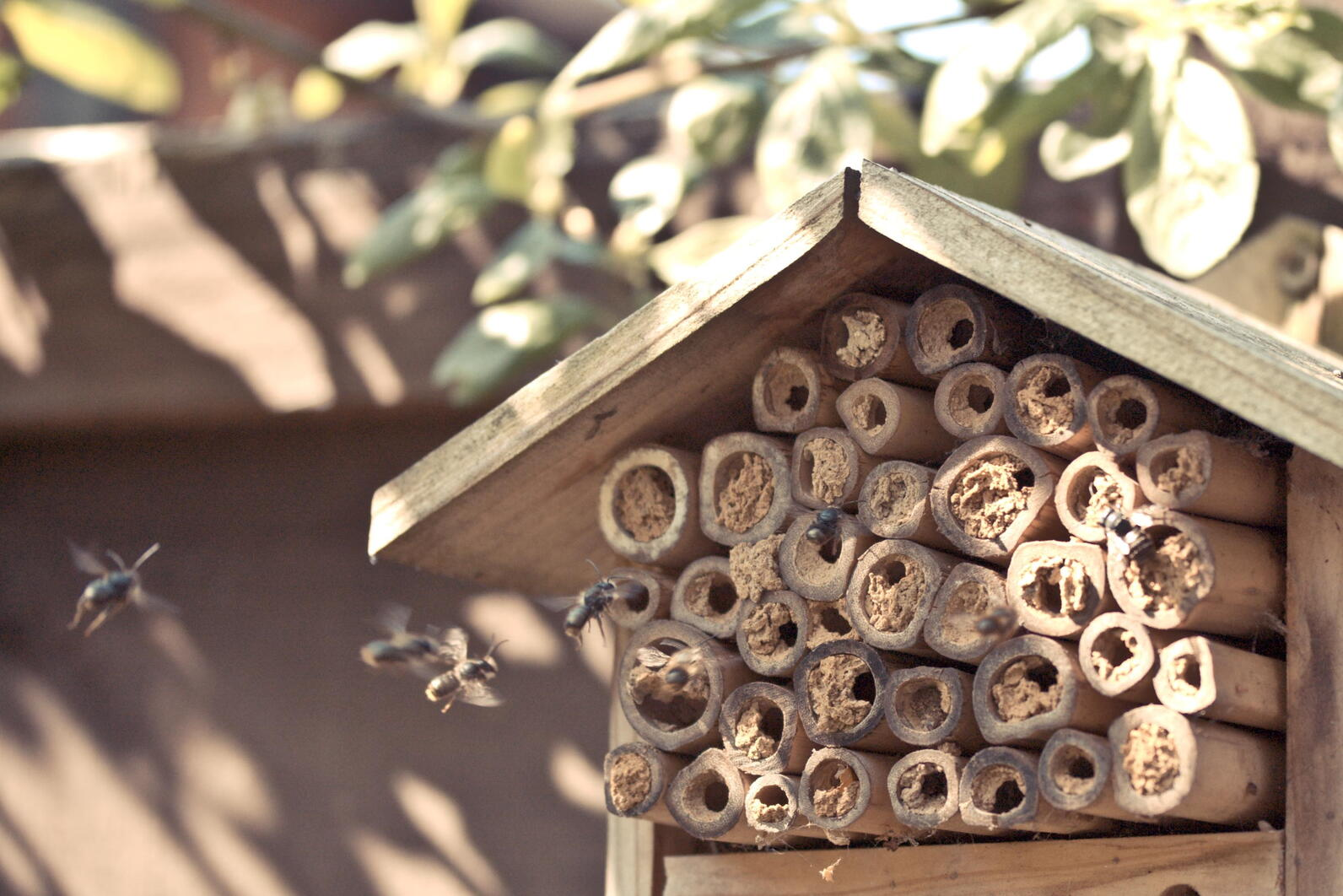 Pollinators utilize a nest block, built from bamboo stakes.
