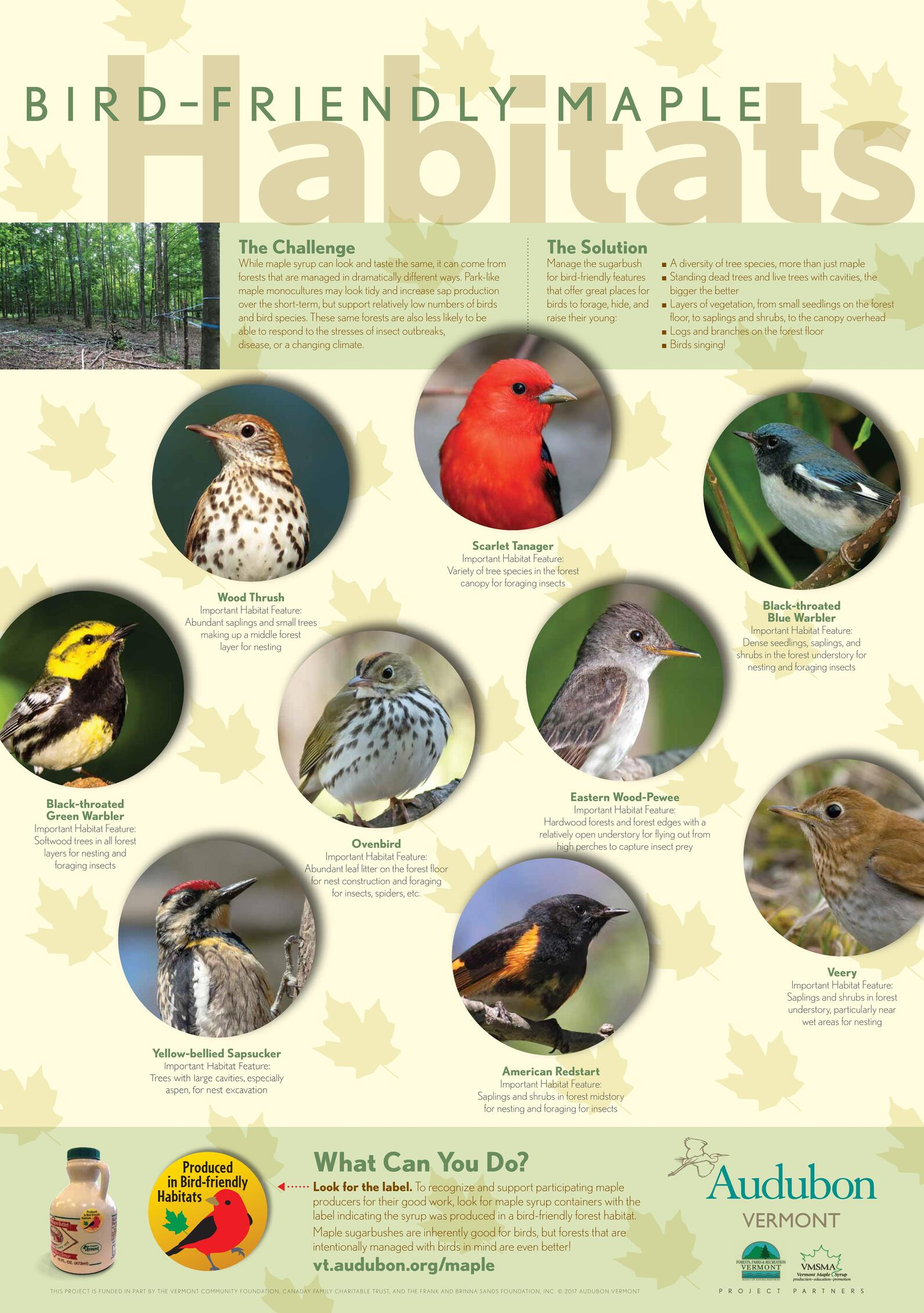 Bird-Friendly Maple Project Poster