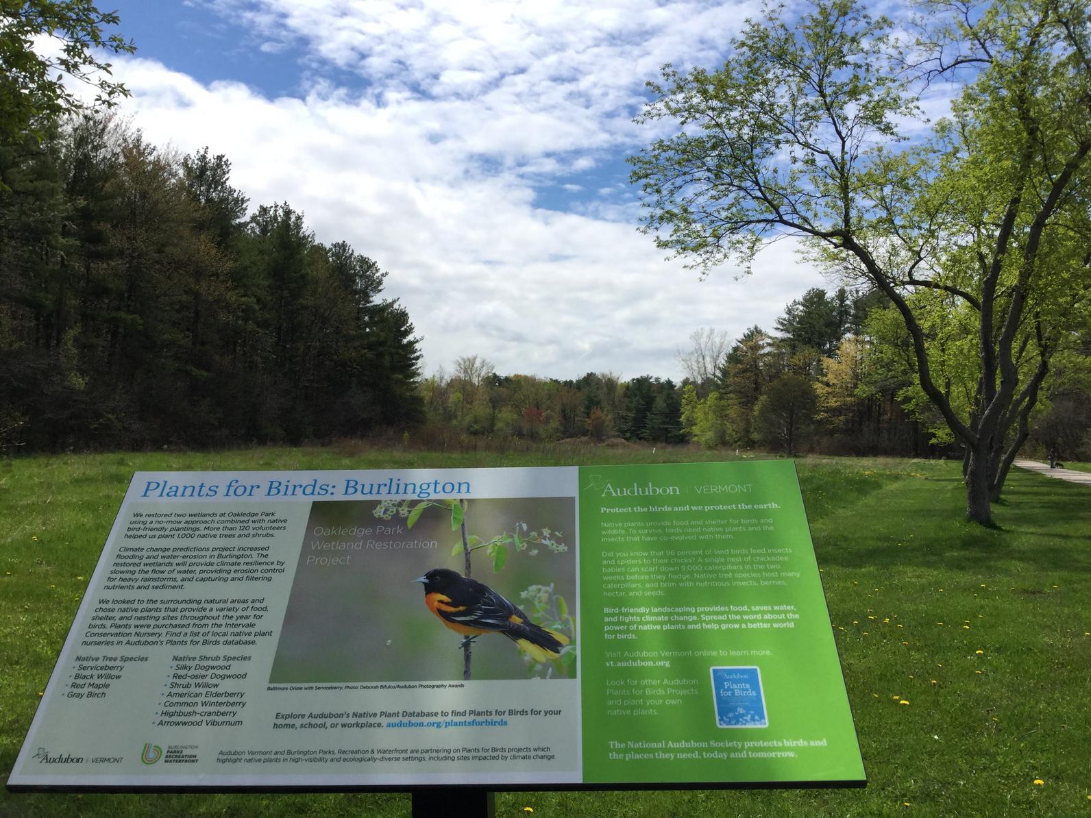 Plants for Birds Oakledge Park wetland restoration