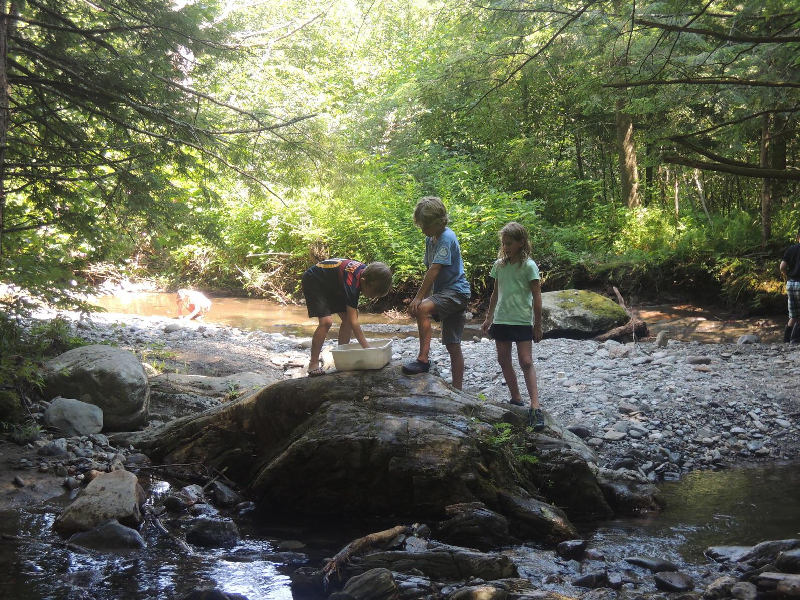 Exploring ecology camp