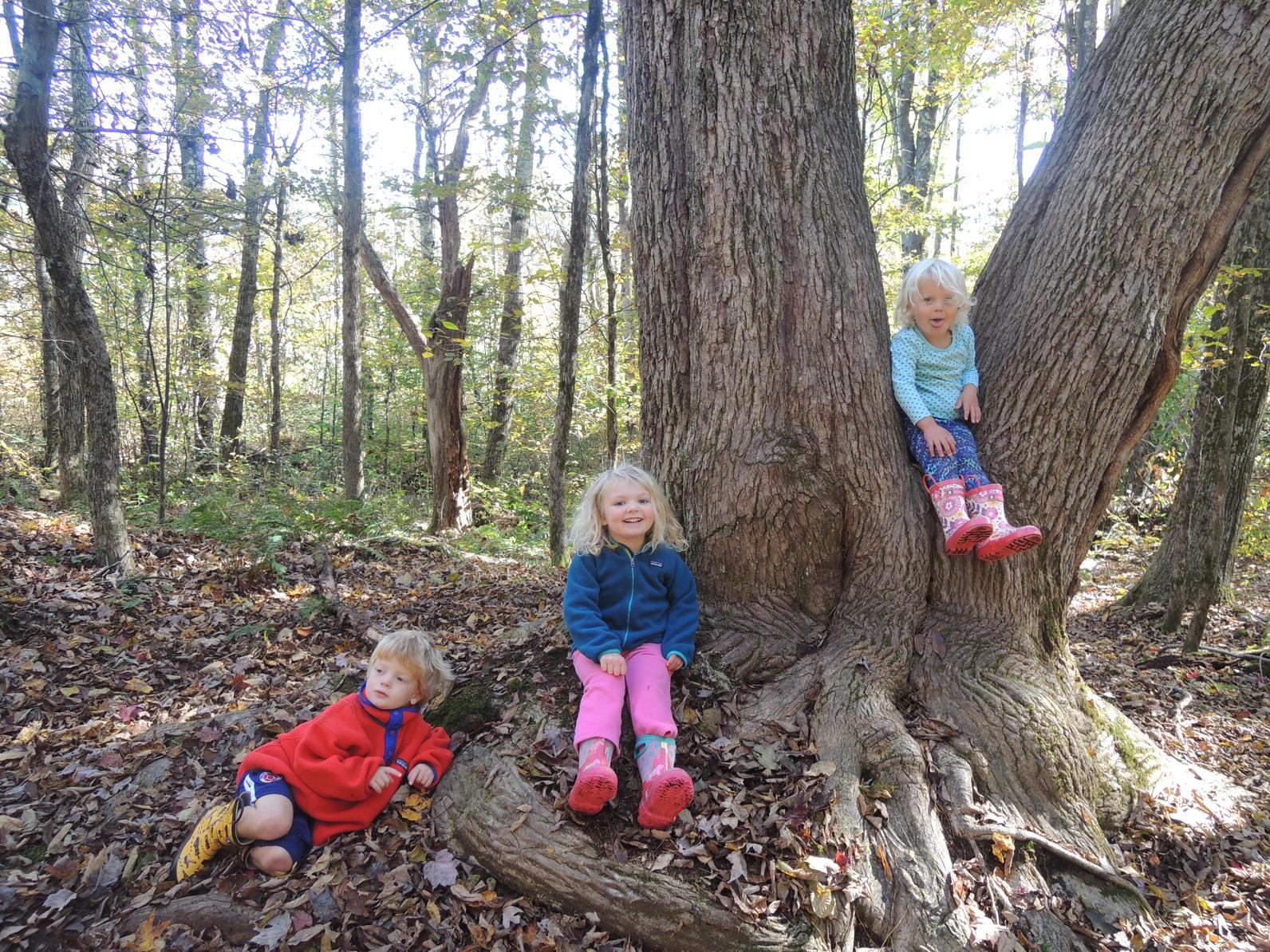 Tree at Mossy Rocks
