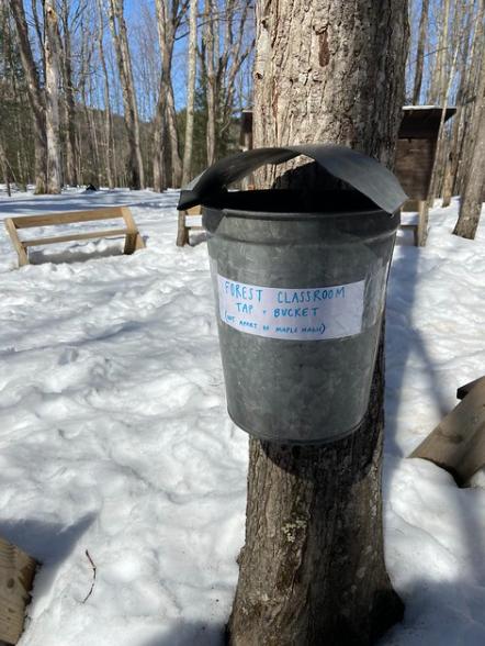 forest classroom sap bucket