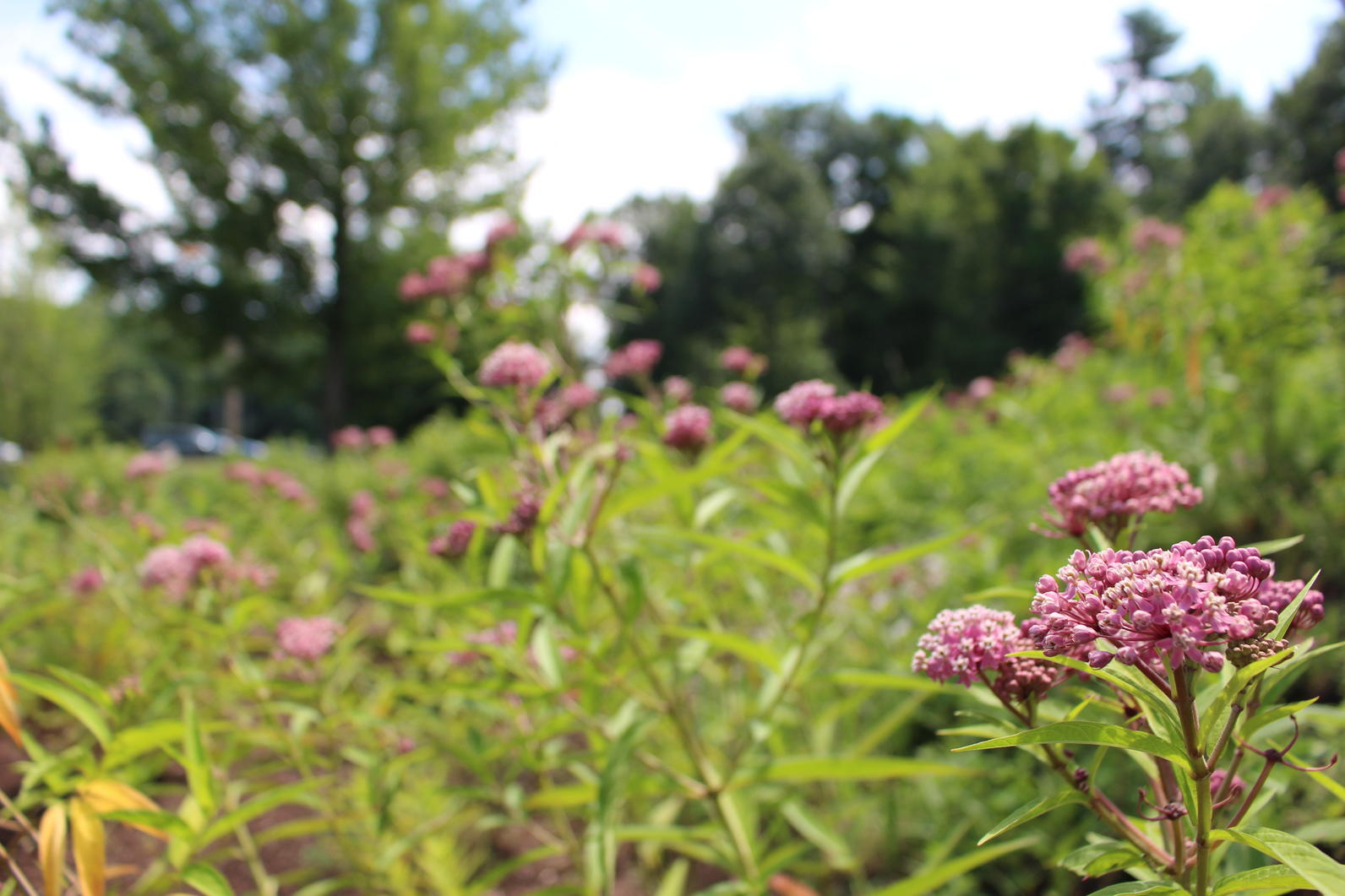 Plants for Birds: Burlington - Leddy Park