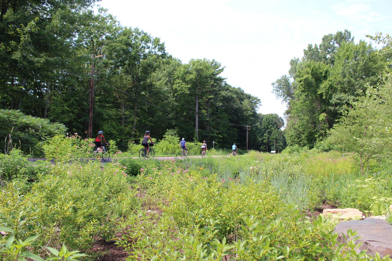 Plants for Birds: Burlington - Leddy Park