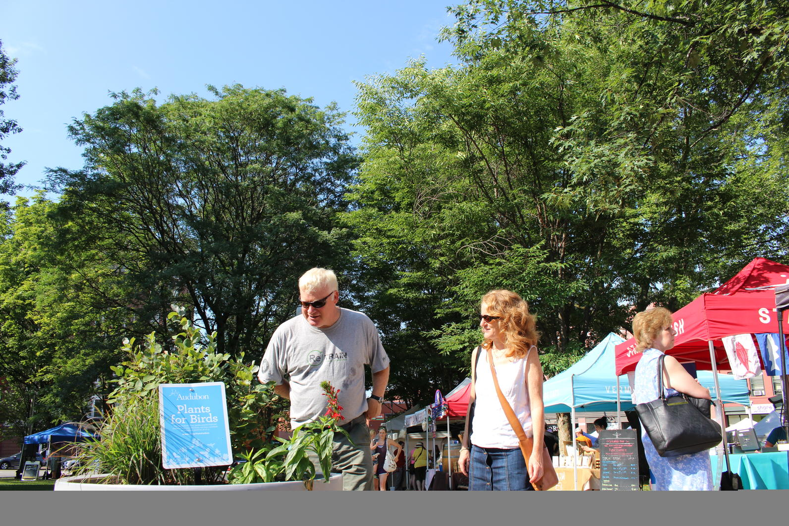 Plants for Birds Urban Planters