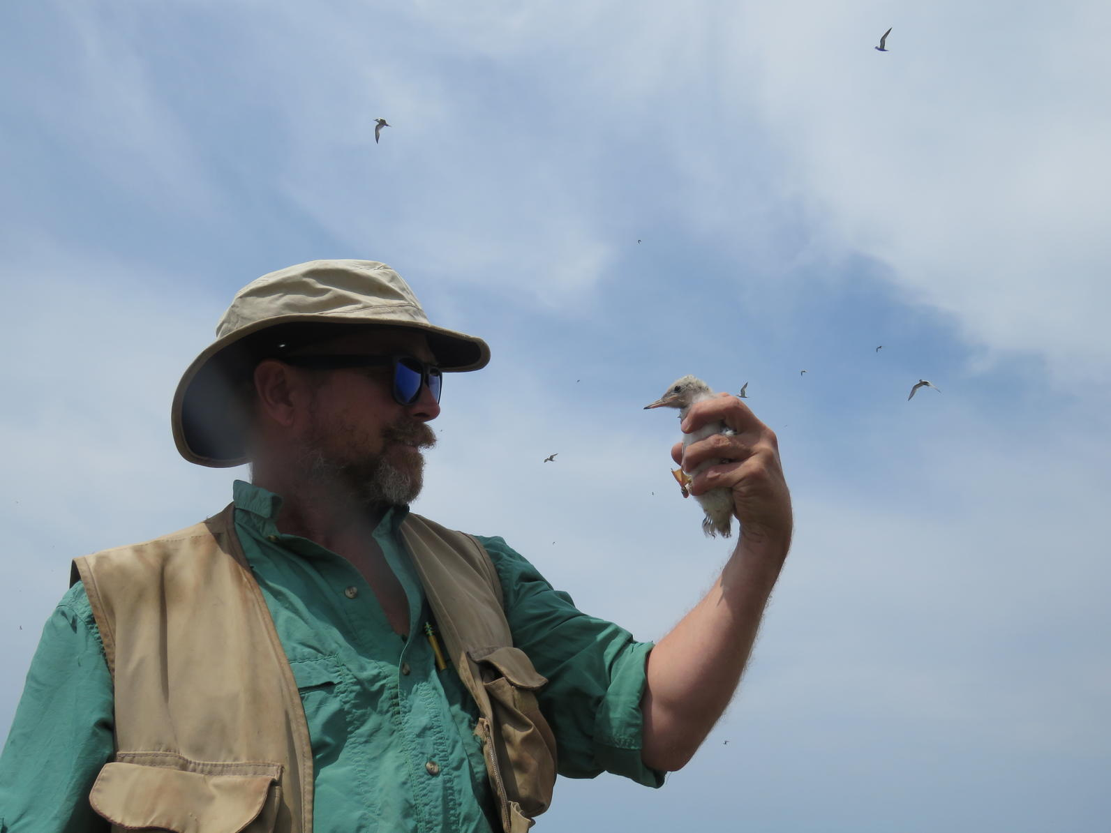 Mark LaBarr holds chick while waterbird soar in background