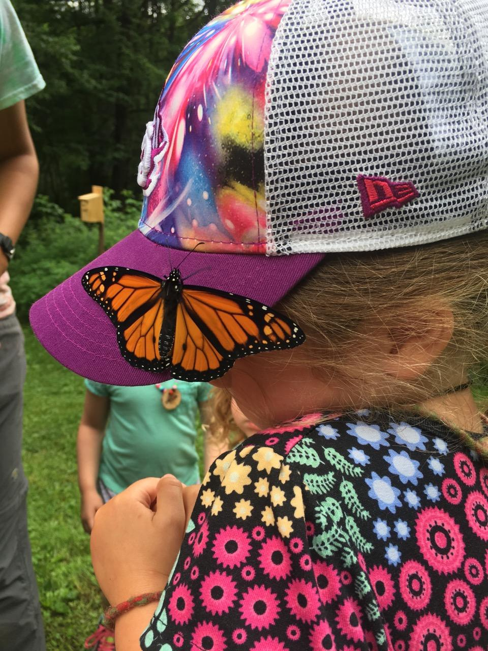 Butterfly on Hat camp