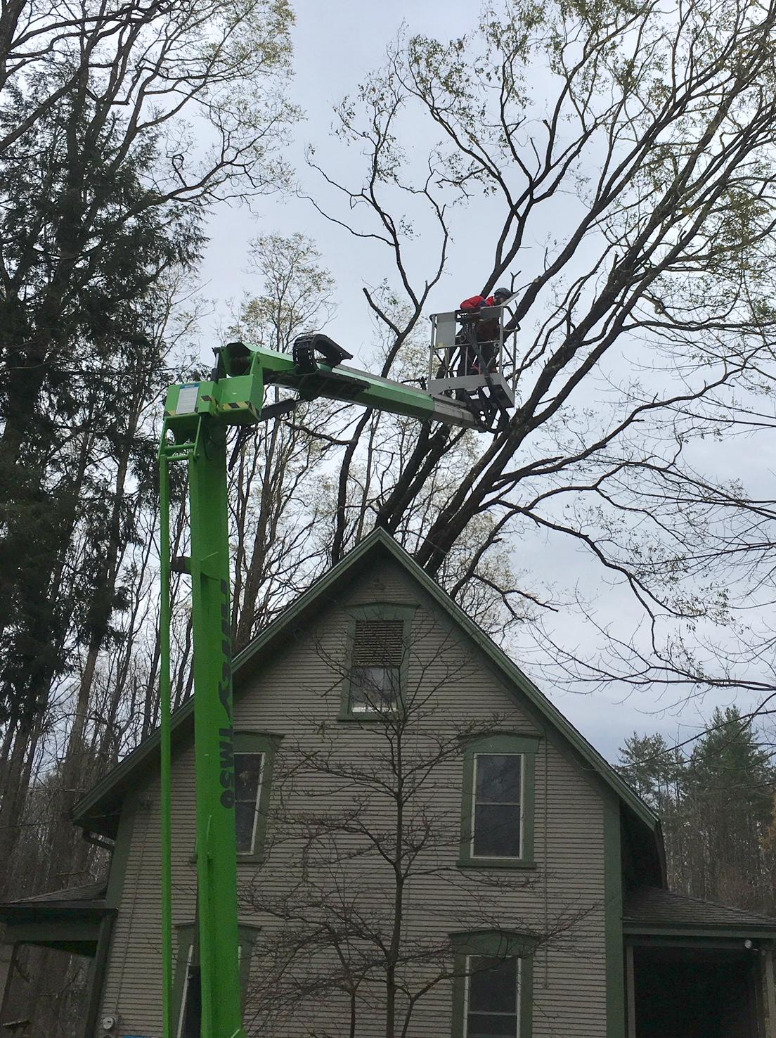 Wind Storm Recovery Update Audubon Vermont