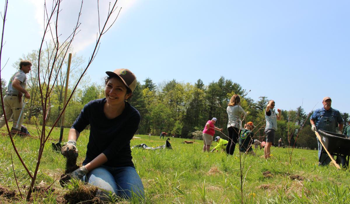 Plants for Birds: Burlington Project