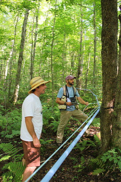 Bird-Friendly Maple Sugarbush Assessment