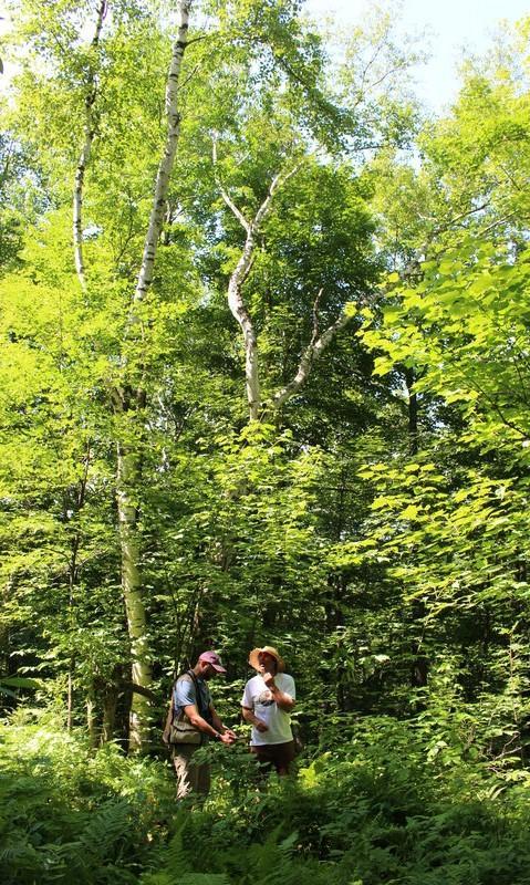 Bird-Friendly Maple Sugarbush Assessment