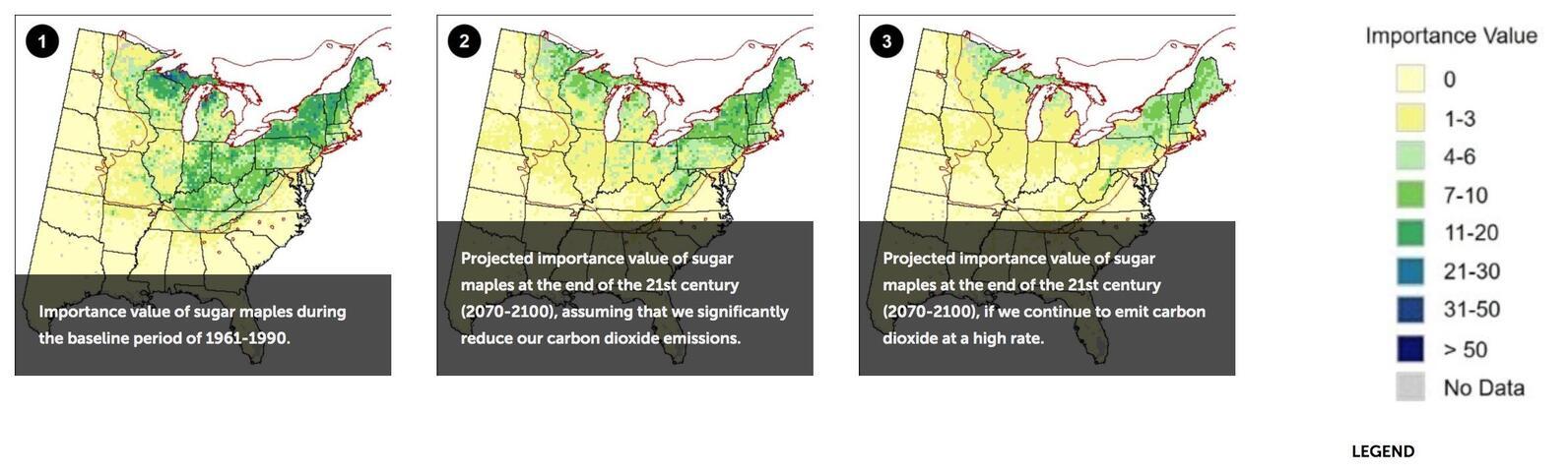 Sugar maple density map