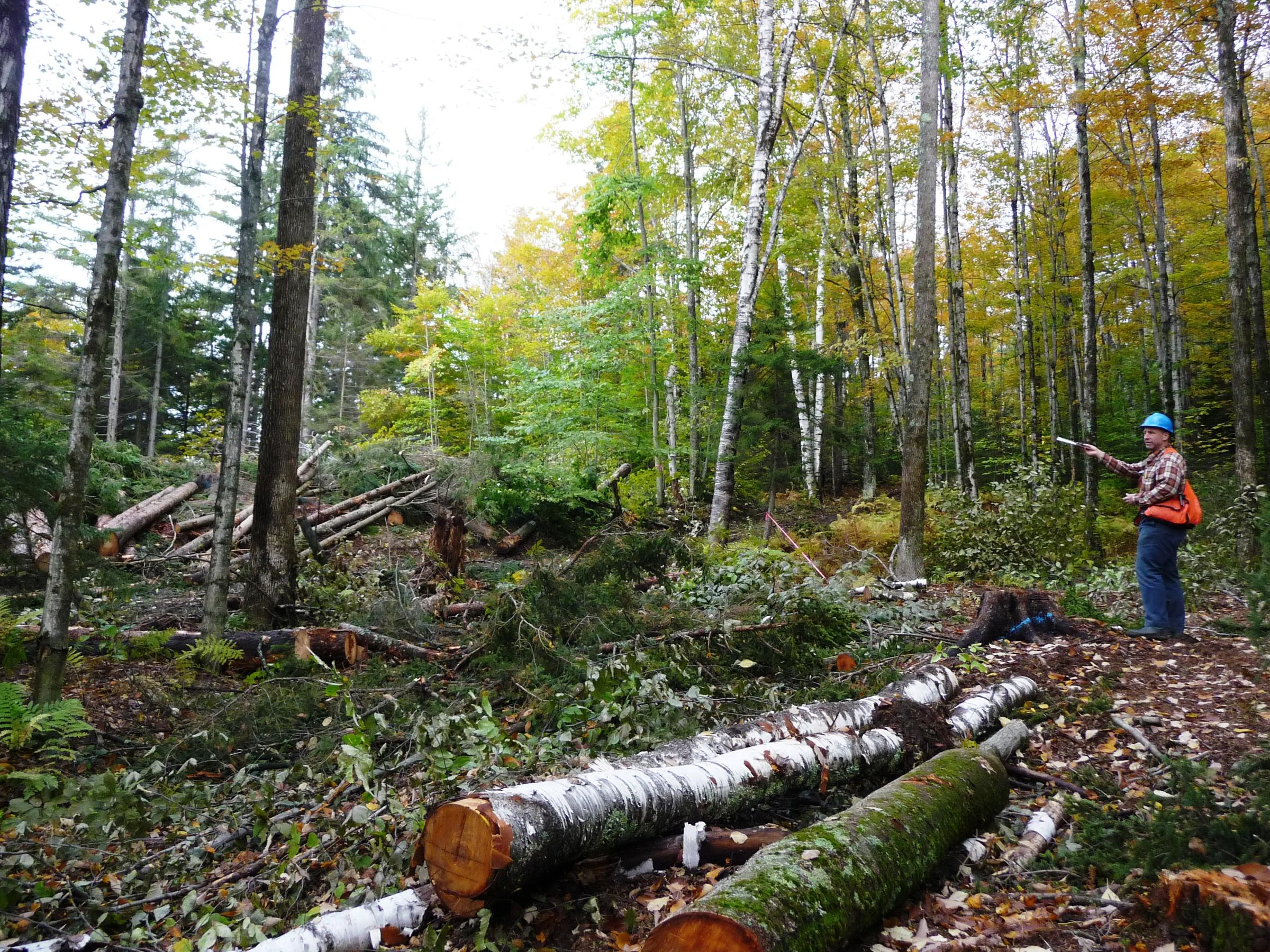 Timber Harvest Demonstration Site