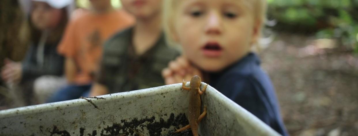fpk_salamander_rae_bronenkan
