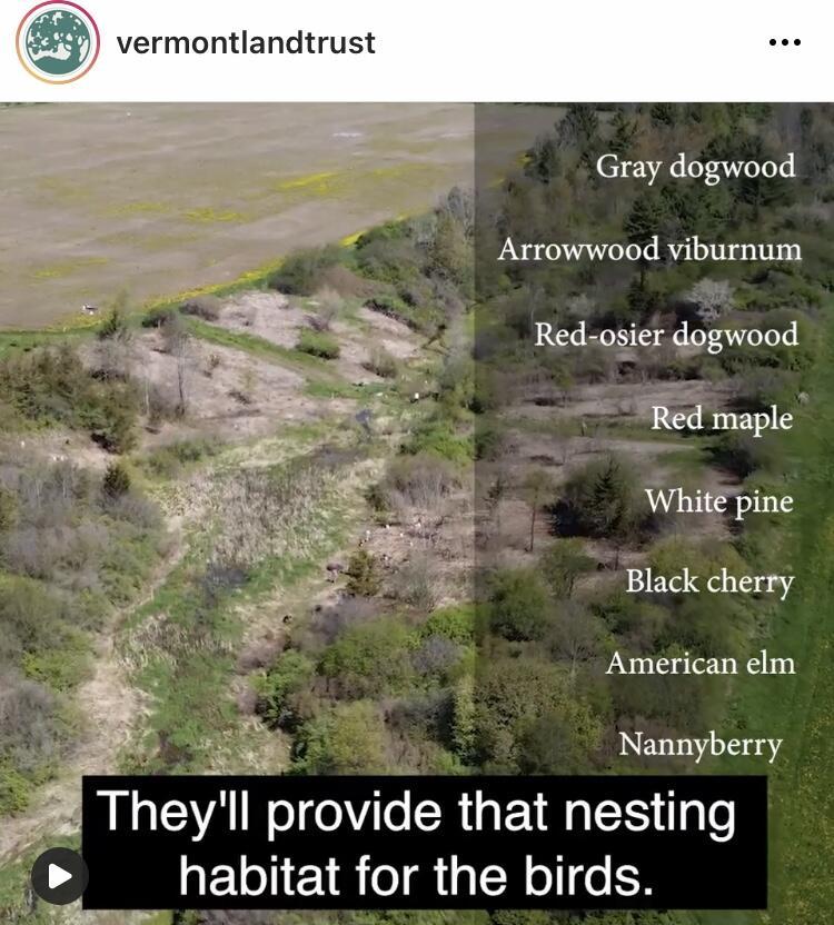Nordic Farms - drone photo of bird habitat planting