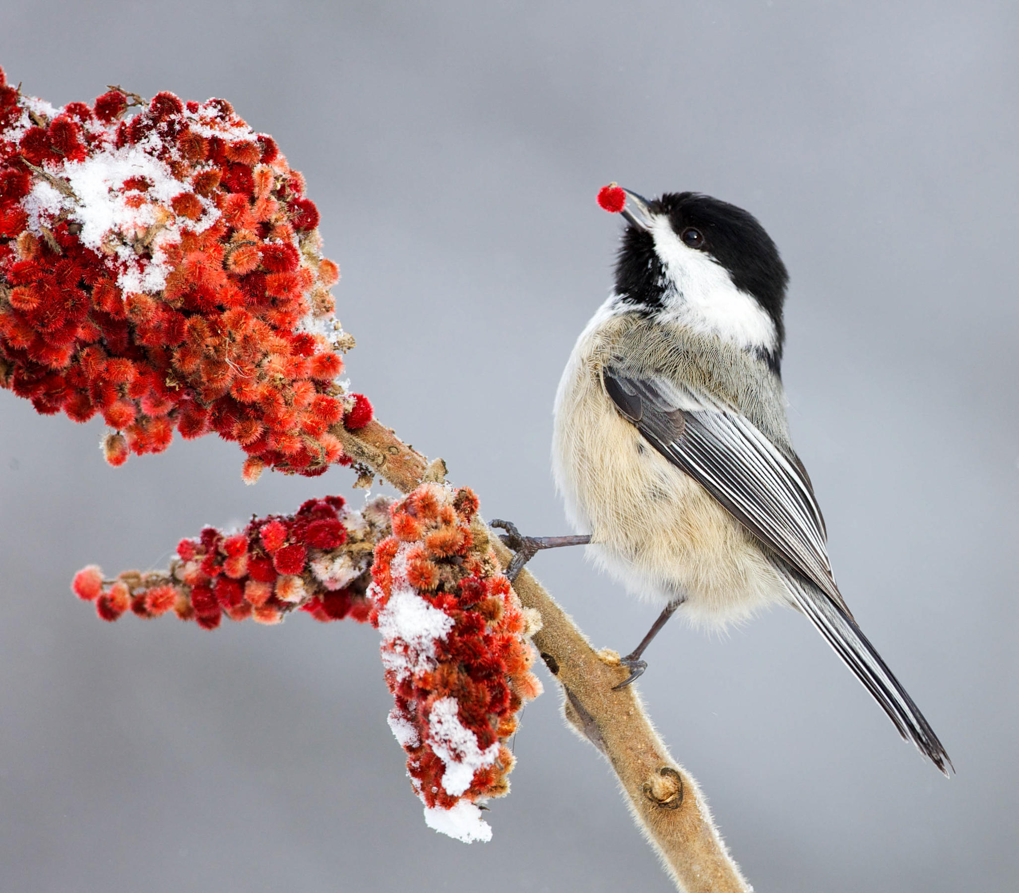 The Great Backyard Bird Count | Audubon Vermont