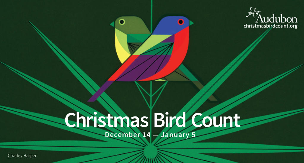 2020 Christmas Bird Count Audubon Christmas Bird Count   Vermont Circles | Audubon Vermont