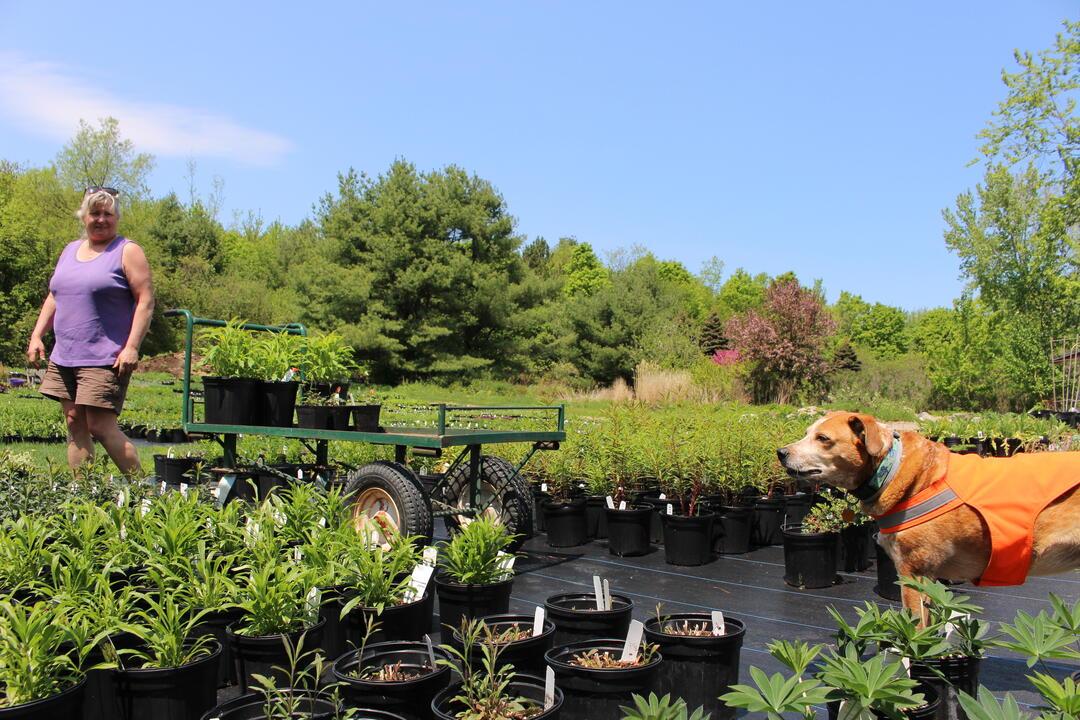 Plants for Birds Full Circle Gardens