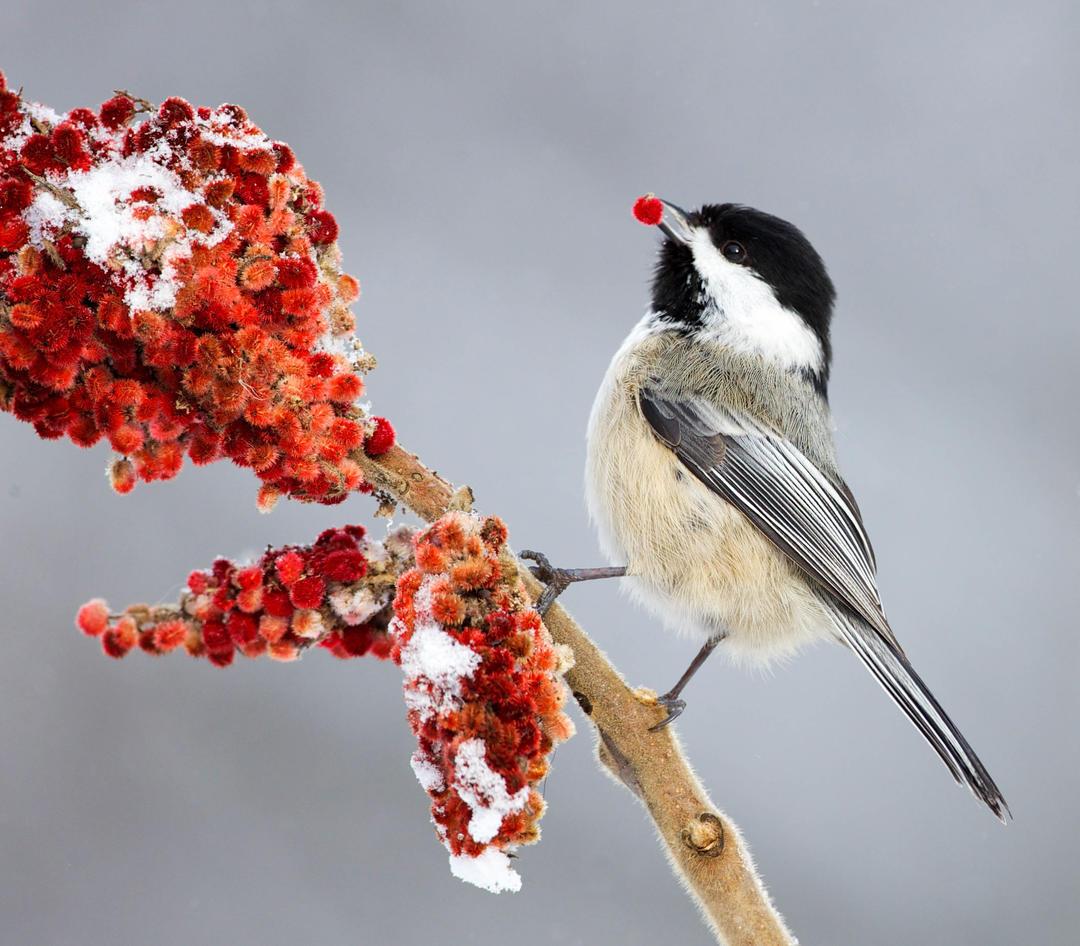 The Great Backyard Bird Count | Audubon Vermont
