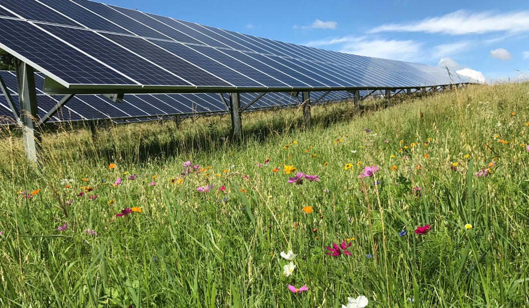 Pollinator-Friendly Solar with Bird-Friendly Buffers