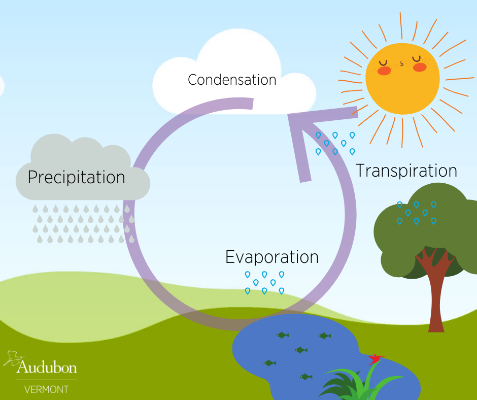 The Water Cycle Revisited Audubon Vermont