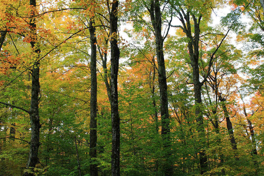 Vermont forest landscape